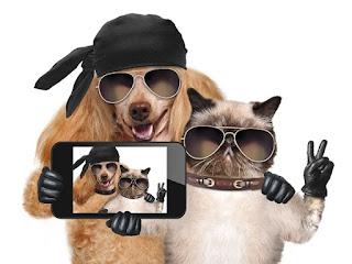 Perro y gato tomandose una selfi con mucha personalidad