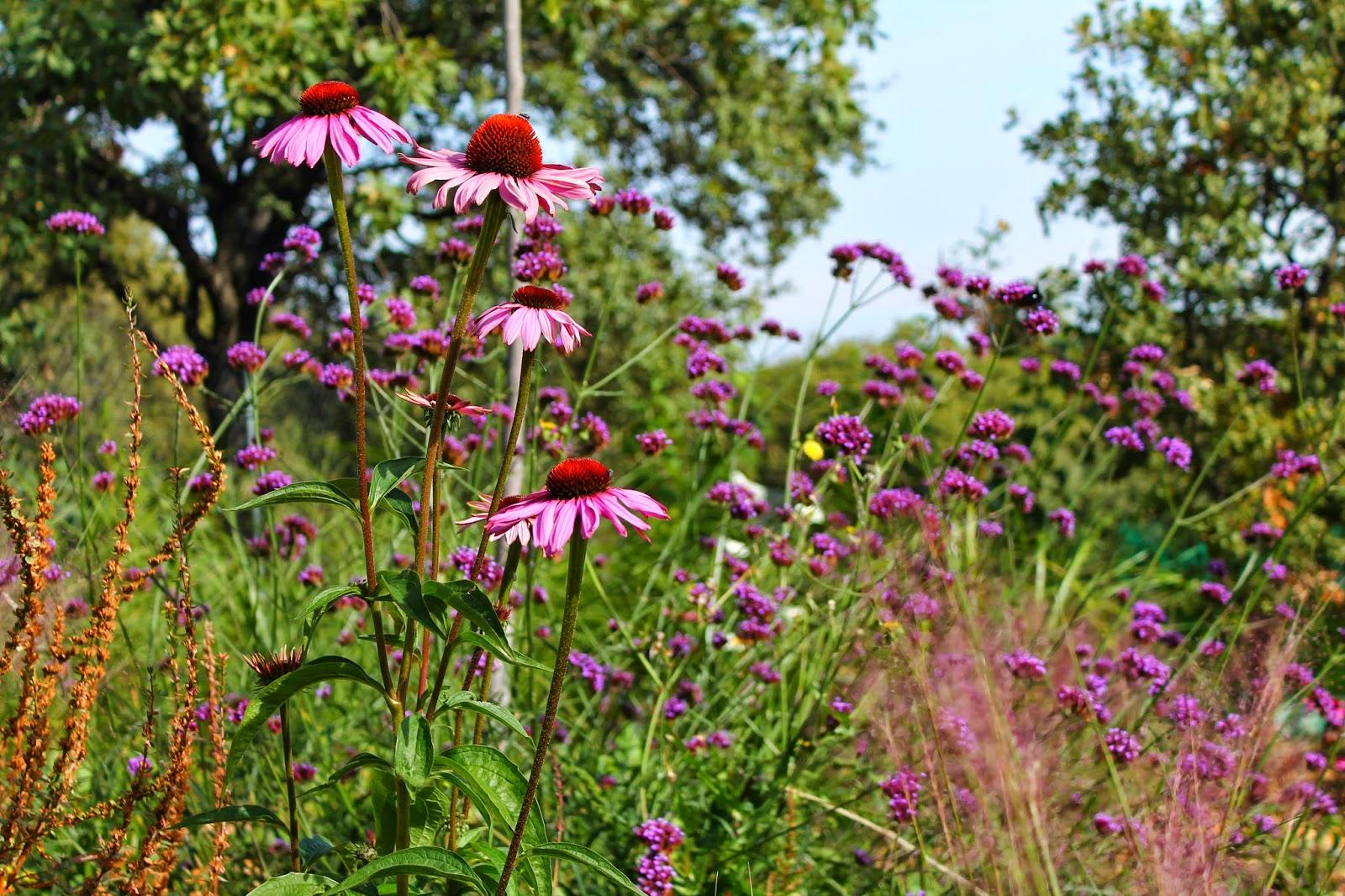 mejores blogs de jardines