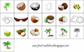19 free shocking coconut clipart