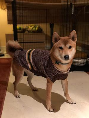 Mascota de Perro Arcoíris