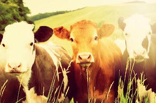 http://www.veganismo.org.br/p/o-que-e-v-eganismo-veganismo-e-uma.html