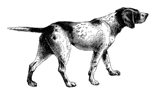 digital pointer dog illustration