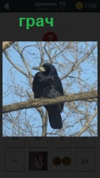 Птица сидит на ветке дерева похожая на грача