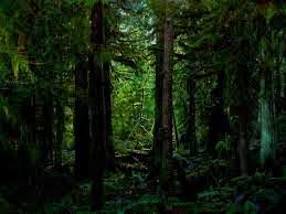 Pengertian Ekologi dan Hutan Menurut Para Ahli