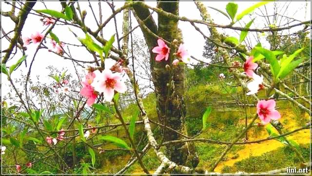 Ảnh hoa đẹp ngày Xuân