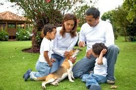 Cómo cuidar a su perro