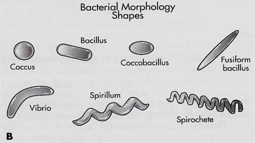 types of staining in microbiology pdf