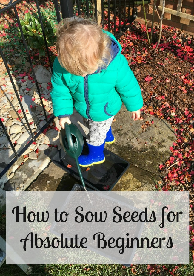 How-to-Sow-Seeds-for-Absolute-Beginners-text-over-image-of-toddler-with-watering-can