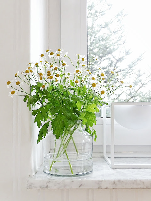Daisy Bouquet Photo
