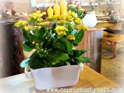 Jardinagem, decoração, suculentas