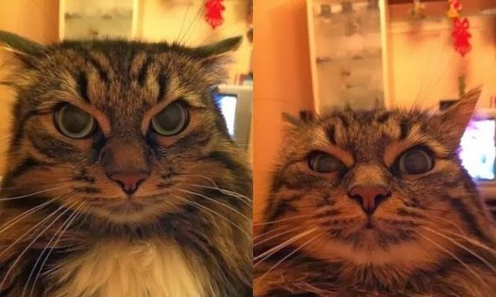 Funny cats - part 87 (40 pics + 10 gifs), cat with angry face