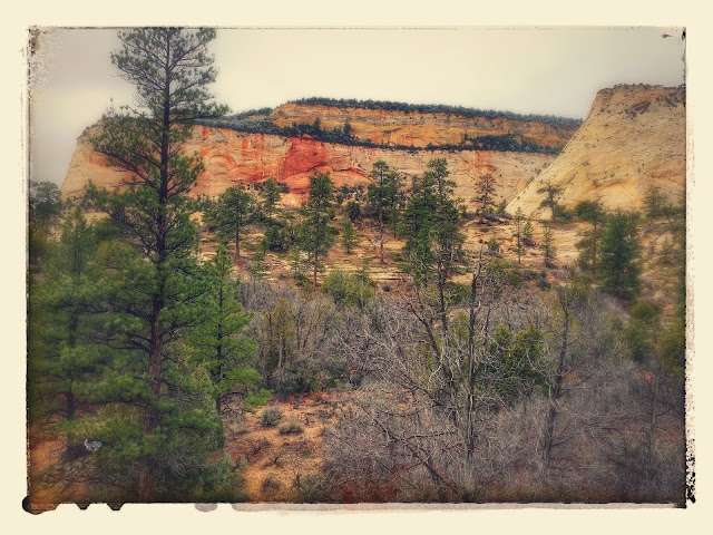 After the #ZionHalf, we drove through the spectacular Zion National Park