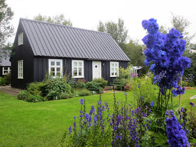 Black house and purple flowers in Akureyri in North Iceland