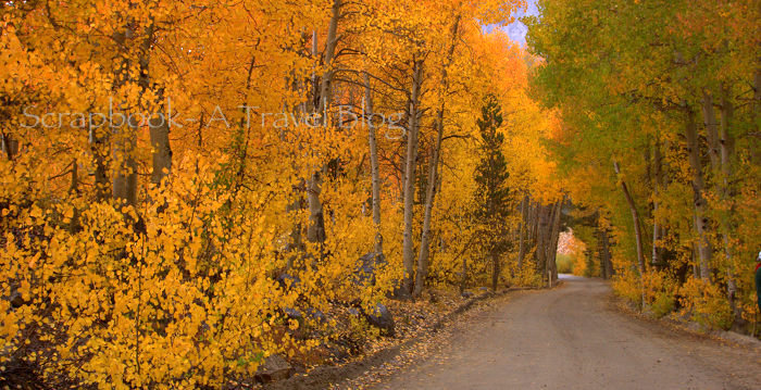 Fall Colors at Eastern Sierras Bishop California
