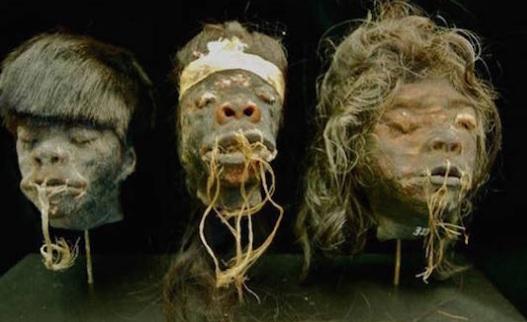 Misteri Kepala-kepala yang Menyusut (Shrunken Heads)