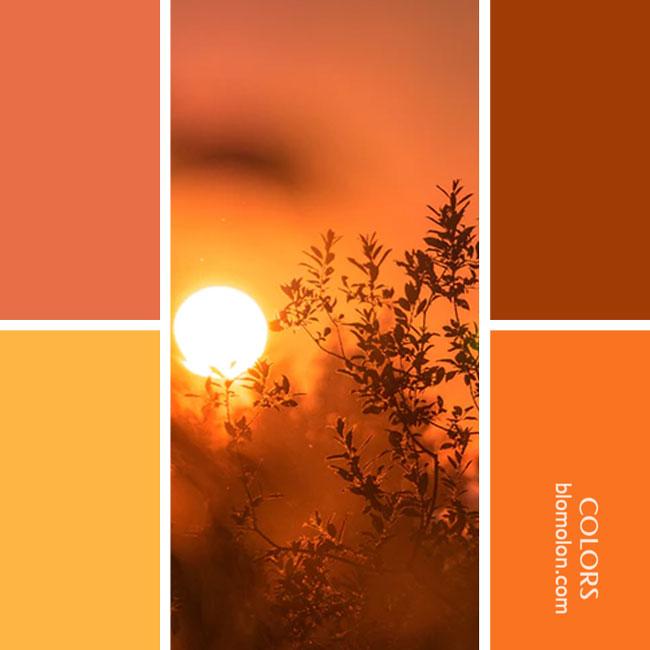 variedad_en_color_combinacion_34