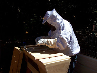 eight acres: getting started with beekeeping - with Making Our Sustainable Life