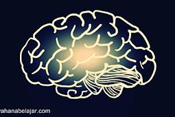 Pengaruh Usia Terhadap Tingkat Kecerdasan Otak