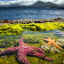 Stunning starfish illuminates the dark Arctic