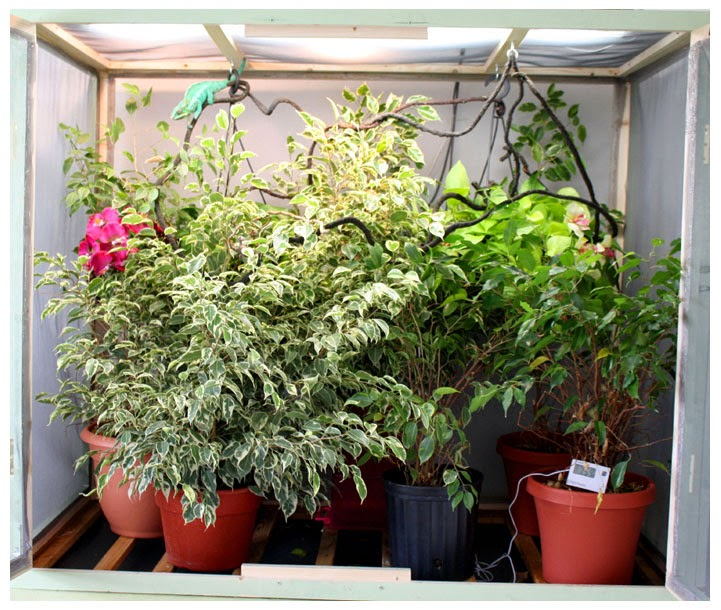 How To Set Up A Proper Chameleon Enclosure | Much Ado ...