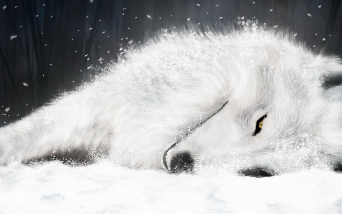 Free Wallpapers Magnificent Wolf Wallpapers