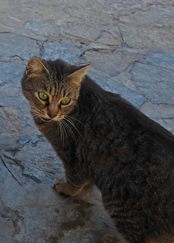 valldemossa cat