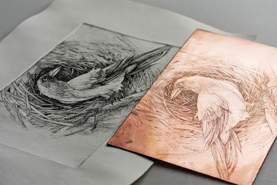 Detalhes da técnica de ilustração, a chapa de cobre e a ilustração impressa.