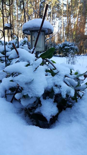 Sonne und Schnee, einfach herrlich!