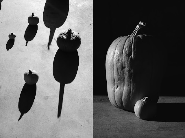 pumpkin photography black and white