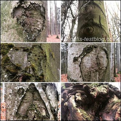 Gebilde auf Bäumen