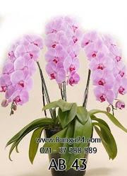 Baru 16 Gambar Bunga Anggrek Palsu Paling Modern Dan Nyaman, Gambar Bunga