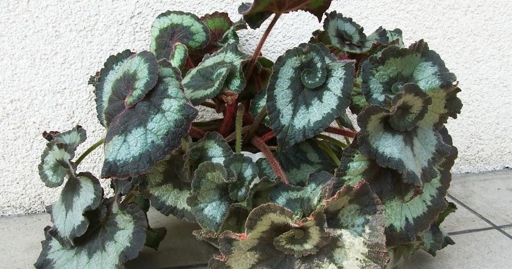 Piante e fiori bizzarri - 1 - 25mq-di-verde