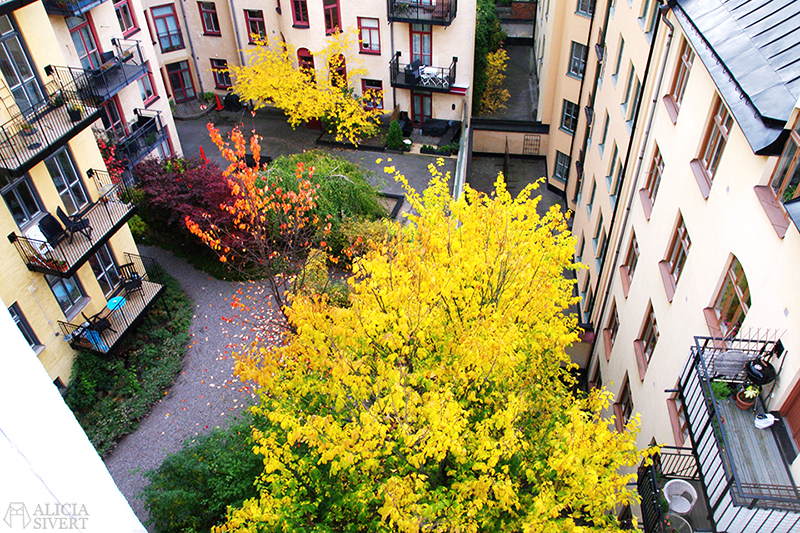 aliciasivert alicia sivert sivertsson oktober octrober höst autumn innergård inner court yard träd gula löv blad tree yellow leaves leaf home stockholm