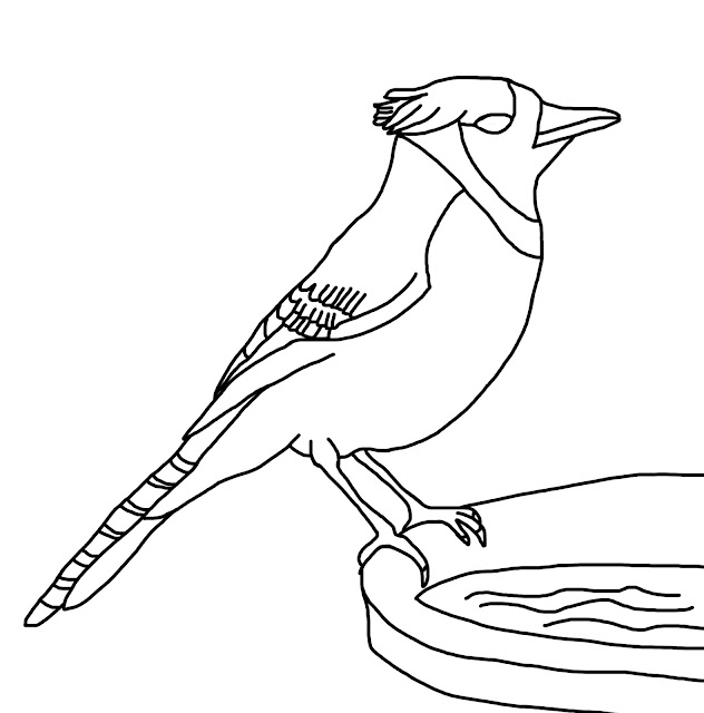 A line drawing of a blue jay (bird) for kids to colour and learn from.