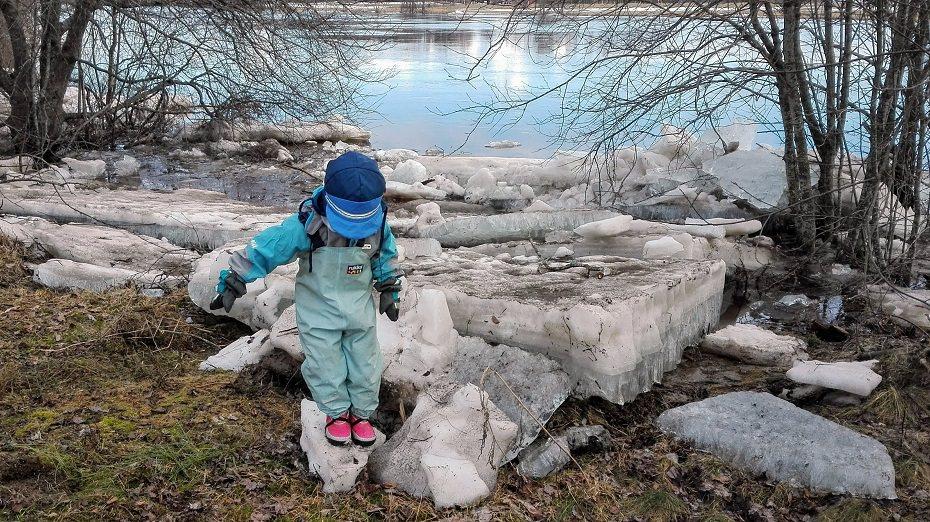 kevättulvan tuomia jäälohkareita