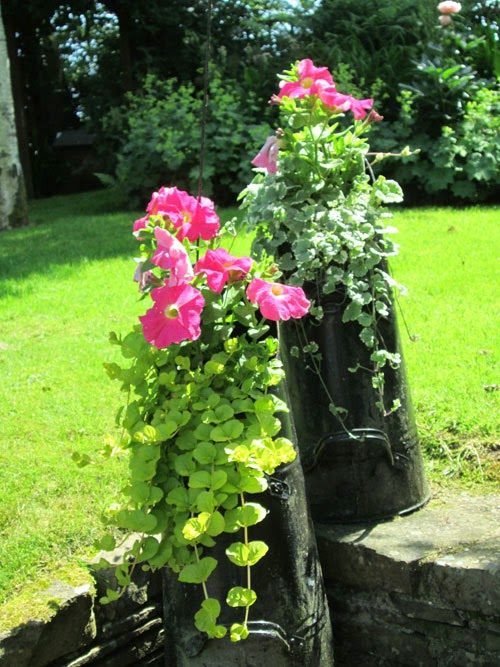 coal skuttle planters