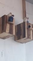 Glodok untuk ternak lovebird