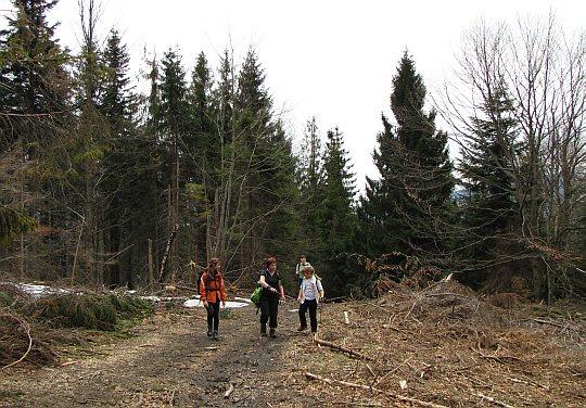 W drodze na szczyt Jaworzyny