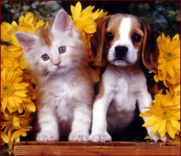 Cute Kitties Hd Wallpapers Latest Funny Pictures Funny Dogs And Cats Together