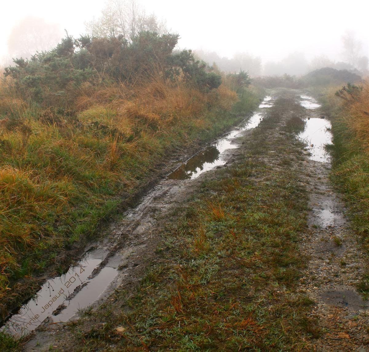 an image of a muddy road leading into the bogs