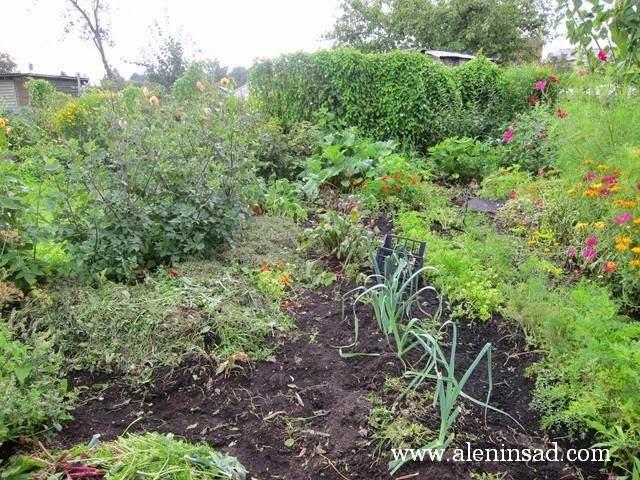 мульча, из, трава, листья, сено, солома, грядки, органическое земледелие, алёнин сад