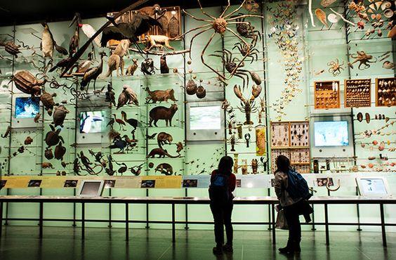 american museum