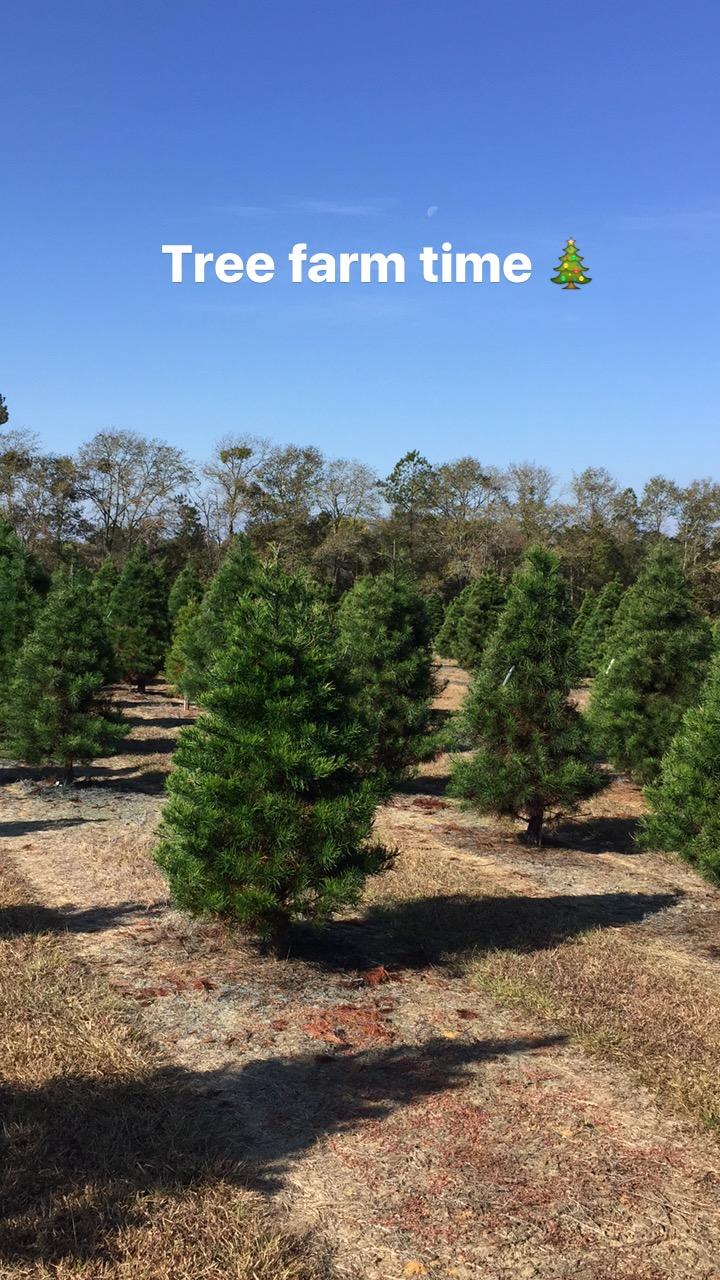 Christmas Tree Farm 2016