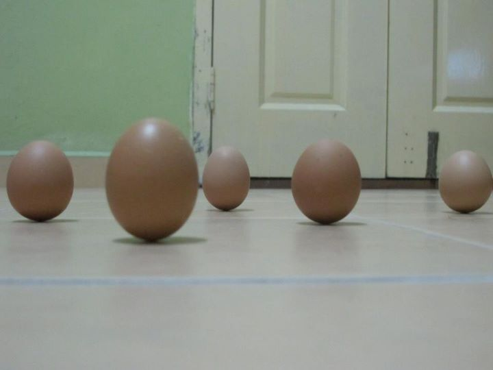 telur berdiri ketika gerhana