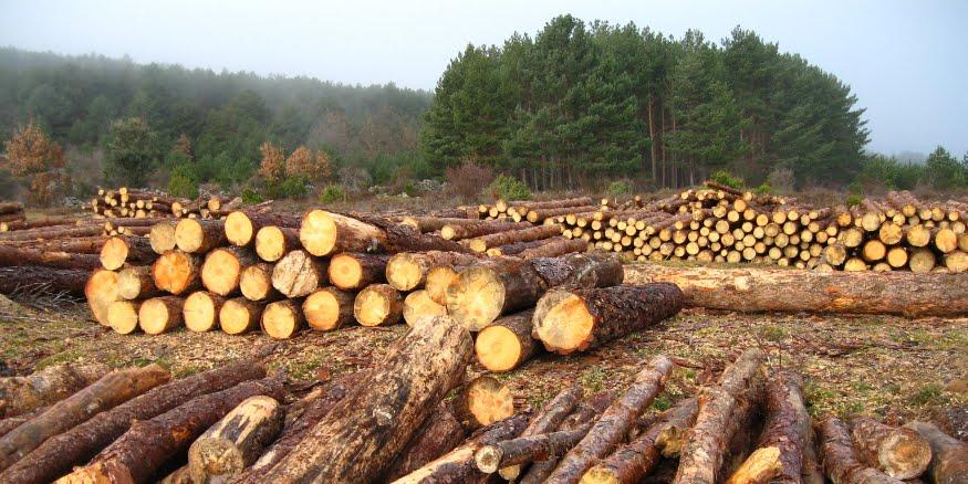 L'attacco silenzioso all'Amazzonia: denunciano deforestazione pesante in Colombia su Avaaz