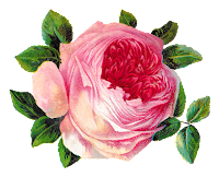 rose flower botanical art image shabby chic crafting clipart download