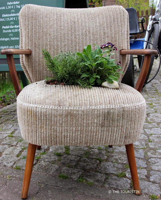 Green plants planted into the seat of a beige corduroy vintage armchair with wooden armrest.