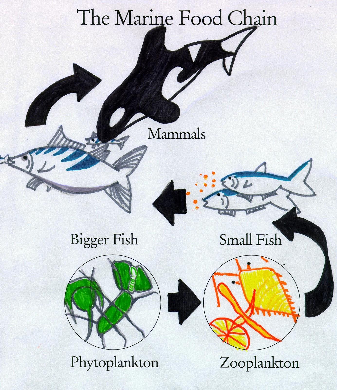 Underwater Chitchat Fishy Food Chain