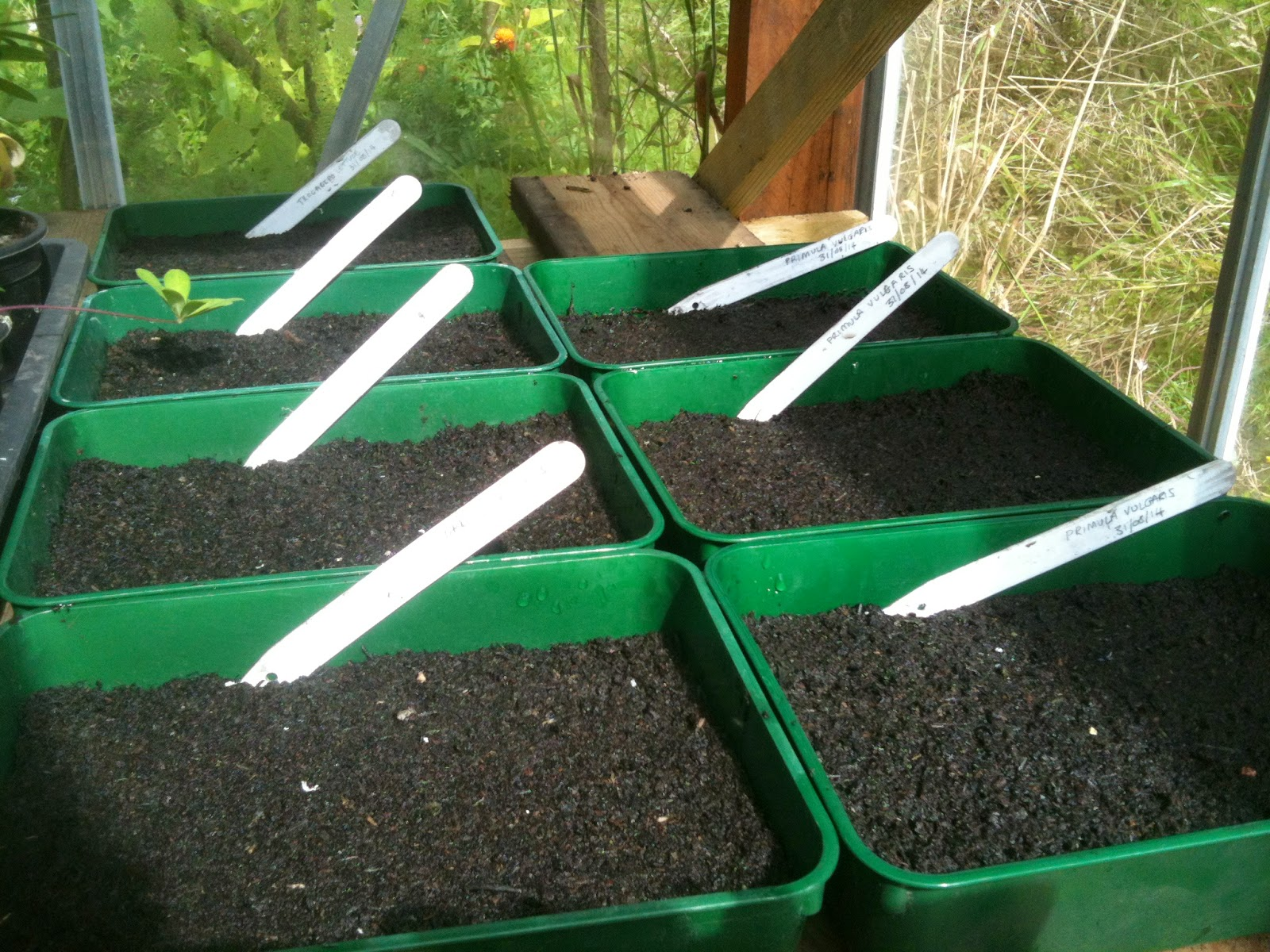 Sowing seeds saves money and means you have plants for next spring.