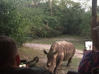 Kilimanjaro Safari, Animal Kingdom Walt Disney World